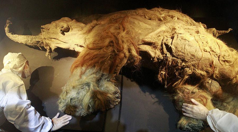 آخرین نسل ماموت ها از تشنگی تلف شدند!